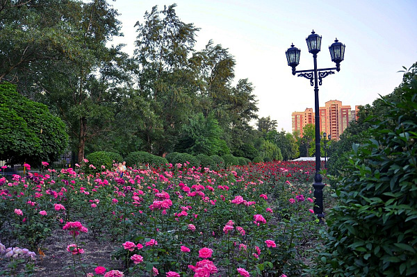 Alley of Roses Park